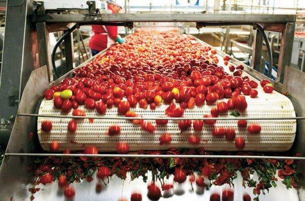 В Енотаевском районе Астраханской области построят завод по переработке томатов