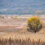 В Хабаровском крае пустующие земли будут передавать инвесторам