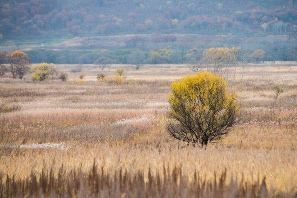 пустующие сельхозземли в Хабаровском крае отдадут в аренду инвесторам