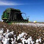 В Ставропольском крае развивают хлопководство