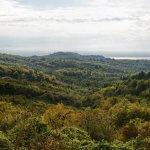 В Абхазии вместо чая будут выращивать фрукты