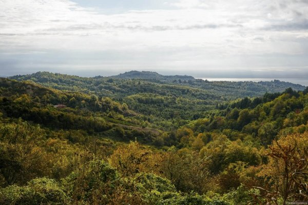 На заброшенных плантациях чая в Абхазии разведут сады