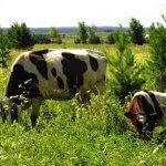 Фермерскую деревню в Тюменской области обживает первый животновод