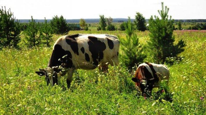 Фермерская деревня в Тюменской области начинает заселяться