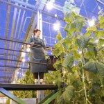 В Челябинской области подходит к завершению строительство тепличного комплекса «Горный»