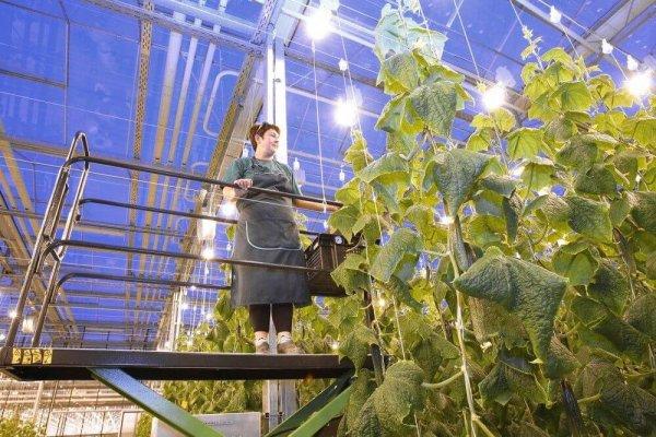 В Челябинской области завершается строительство тепличного комплекса Горный