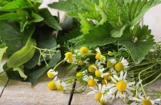 Препараты на основе алтайских трав отправляются в Словению