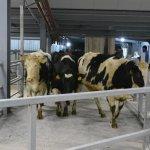 В Костромской области введена первая очередь нового молочного комплекса