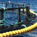На Камчатке создается первое предприятие по производству аквакультуры