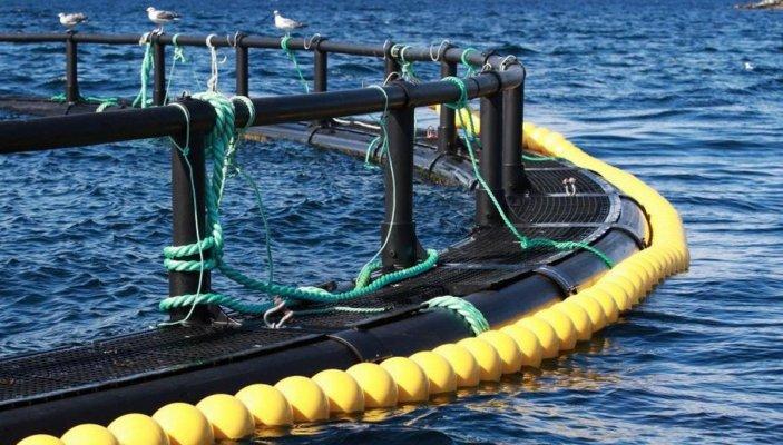 На КАмчатке начинает действвоать первая в регионе акваферма