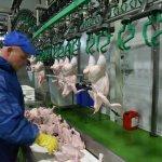 Почему растет цена на продукцию птицепрома
