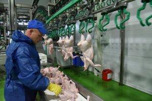 ПАричичны роста цен на мясо курицы