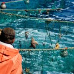 Крымские производители аквакультуры смогут арендовать участки без торгов