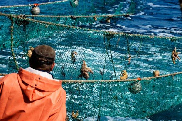 Владельцы устричных ферм Крыма довольны изменениями закона о рыбоводстве и аквакультуре