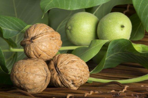 В Ингушетии кроме грецких орехов будут выращивать фейхоа, мушмулу и гранаты