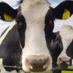 Россельхознадзор предлагает ввести идентификацию личного скота