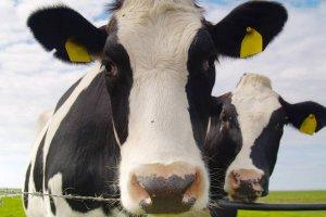 РОссельхознадзор предлагает метить весь личный скот граждан