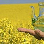 В Томской области вводят в эксплуатацию новый маслодельный завод