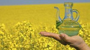 В Томской области завершено строительство первой очереди завода по производству рапсового масла