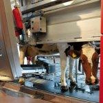 В Башкирии введен в эксплуатацию цех по сборке доильных роботизированных установок