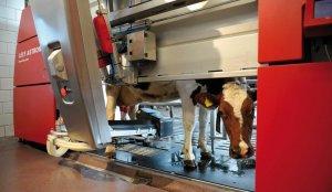 Цех по сборке голландских роботов дояров открылся в Уфе