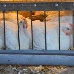 В Наро-Фоминском районе Московской области «Элинар-Бройлер» ввела в строй еще три птичника