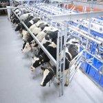 В Кемеровской области начал работать животноводческий молочный комплекс