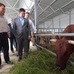 В Московской области в этом году появится очередная молочная ферма