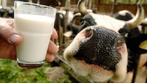 В Башкирии отмечается резкий скачок заболеваемости коров лейкозом