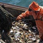 Рыбаки российского Севера без системы «Гонец» не имеют права ловить рыбу