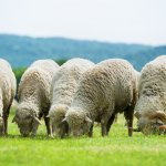 Компания «Дамате» расширяет ассортимент мясной продукции