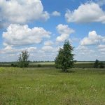 В Новгородской области будут следить за использованием земель сельскохозяйственного назначения