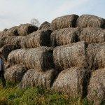 Во Владимирской области планируют выращивать техническую коноплю