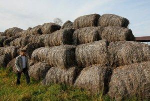 В вязниковском районе Владимирской области намерены выращивать техническую коноплю