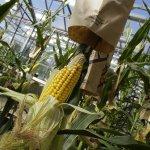 Технологиями Bayer смогут пользоваться российские ученые и семеноводческие центры
