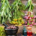 В  Бурятии открывается агрономическая школа лекарственного растениеводства