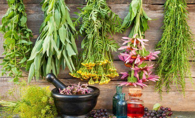 В Бурятии создана агрономическая школа по лекарственному растениеводству