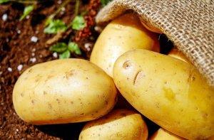 Селекционеры Татарстана вывели новые сорта картофеля