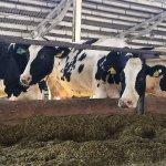 В Волгоградской области СП «Донское» строит крупный животноводческий комплекс