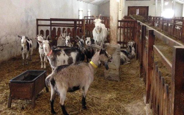 В Шпаковском районе Ставрополья строится крупная козья ферма
