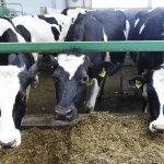 В Тюменской области компания ARSIB AGRO намеревается построить 5 животноводческих ферм
