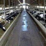 В Московской области новый молочный комплекс построит ГК «ЭкоНива»