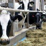Уникальный животноводческий комплекс строится в Нижегородской области