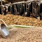 Закупка импортных кормовых добавок может обернуться банкротством сельхозпроизводителей