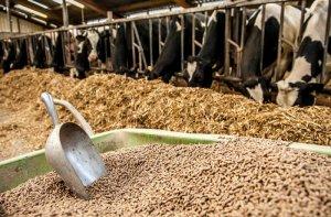 Несоотвествие законодательных документов может привести к банкротствуотечественных сельхозпроизводителей