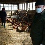 Птицеферма «Хуторок» в Смоленской области на полтора месяца прекратила свою  работу