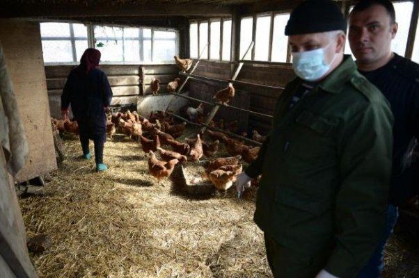 В Смоленской области Россельхознадзор на 1,5 месяца закрыло птицеферму Хуторок