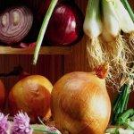Сельхозпроизводители Волгоградской области лидируют по выращиванию моркови и лука