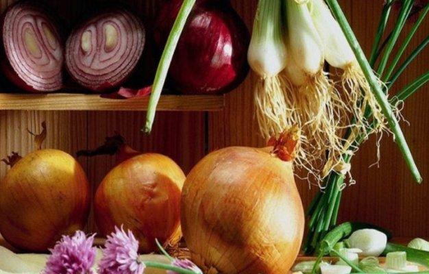 Волгоградская область лидер России по выращиванию моркови и лука