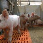 Предприятие «Тамбовский бекон» ГК «Русагро» увеличивает объемы производства